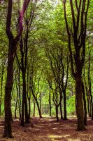 Green Lushness by tvurk