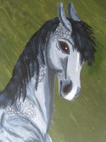 Dappled Grey Horse by ChaosToGlory