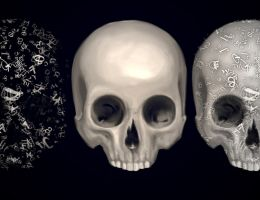 Skulls Anatomical Observation by TheSeventhArete