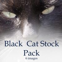Black Cat stock pack by Snowys-stock