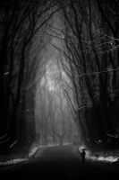 Scary Forest by nicolemetalgirl