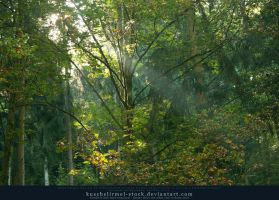 Rays of Sunlight through the Trees by kuschelirmel-stock
