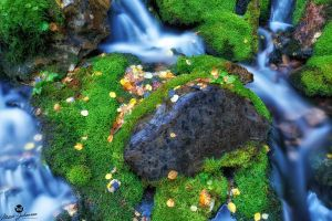The Moss Surrounded Rock by mjohanson