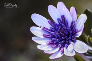 Multifaceted by Zanarky