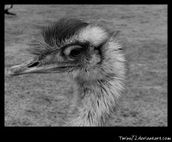 another emu by Twins72