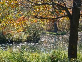 Pond 1 by erl-stock