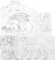 Dragon sketches by Trilliah
