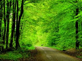 green as the springtime by Mittelfranke