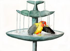Bathing Parrot by greencheek