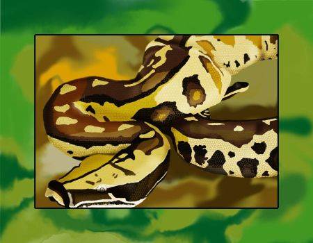 Snake by Persi