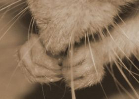 Alexas paws by hontor