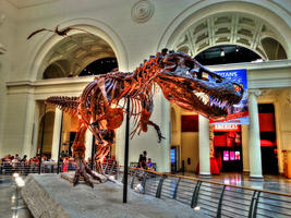 Tyrannosaurs HDR Edit. by simpspin