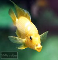 Happy Fish by ShelleyJackman
