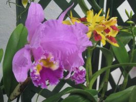 141 orchid show by crazygardener