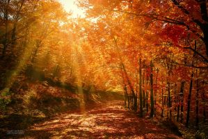 Rays in autumn forest by valiunic