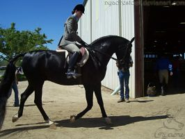Rancho Murieta 08 - Hunter 03 by Nyaorestock