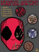Deadpool Anatomy by TheButterfly