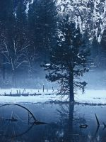 Winter Pond -stock by Synaptica-stock
