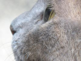 Close Up Cat by beverly546