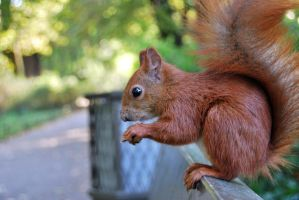 2010-10-05 Squirrel 05 by PiotrekHenry
