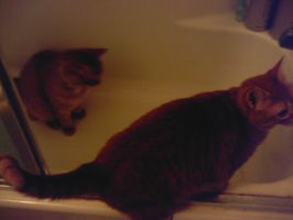 2 Cats in and on a...tub oO by megan-the-Speeddemon