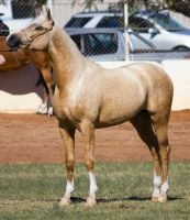 STOCK - 2014 Youngstock-114 by fillyrox