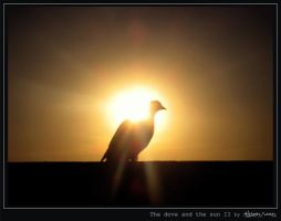 Dove n the sun II-Dove Series by alejandro1717