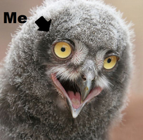 I Is Crazy Owl by JellyKitteh