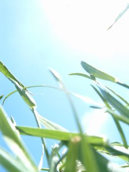 Blades of Grass 2 by sweetmelissa21