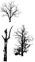 3 Trees brushes by PeriwinklePaisley