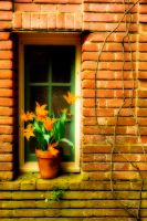 Filoli Window by enunez