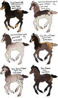 Seal Brown x Cameo Foals by gyngercookie