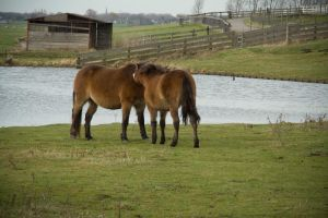 horse love by priesteres-stock