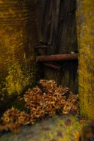 Decay by annamorphic