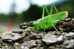 Grasshopper by dodonline