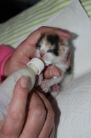 kitten drinking out a bottle by kabhes