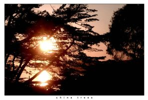 china trees by terpsichorean
