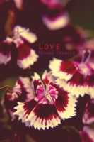 Love second chances by ksouth