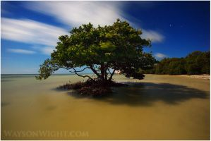 Mangroves n' Moonlight by tourofnature