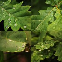 Colbie Caillat - Droplets by PASOV