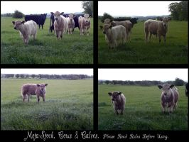 Cows and Calves Stock Pack by Meta-Stock
