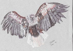 Eagle in Flight 2 by isabel56