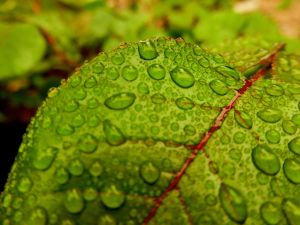 Drops of Peridot by Anneay9