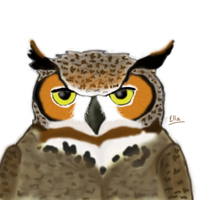 Owl Test drawing by AvatarOindaW