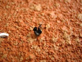 Ant by droy333