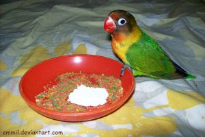 Peewee learned to eat parrot pellet by emmil