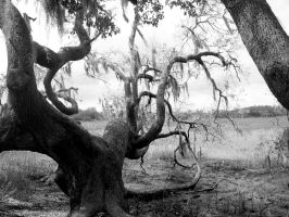Another Creepy Tree by mollykubes539