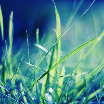 grass by Megson