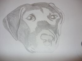 drawing of my dog bob by fierysoul