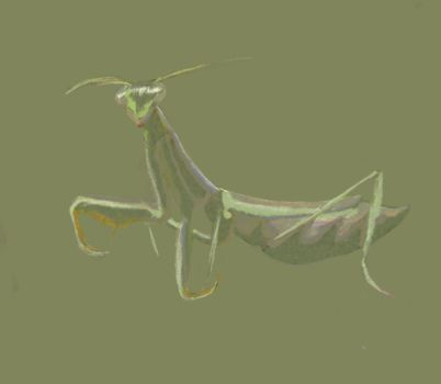 Mantis by Rossross1993